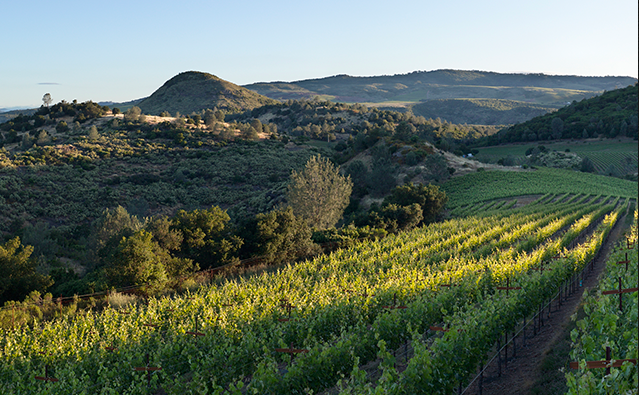 """Napa Vineyards"",""Napa Valley Vineyards"",""Atlas Peak Vineyard"""